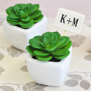 Mini Potted Succulents